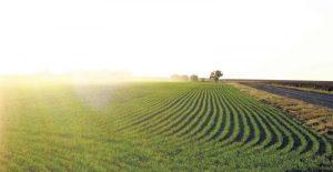 Эпоха клонов - Бум земледелия или как за работать на нем